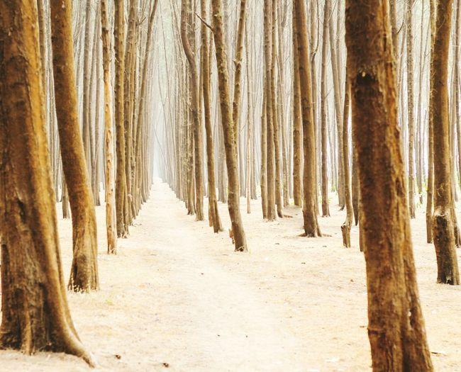 Treelined In Forest