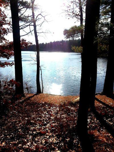 Massachusetts Lake View Lunch Time Fall Beauty