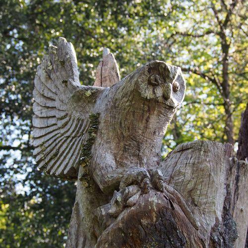 Timber Owl Cardiff Bird Of Prey Taking Photos Walking Around Owl Art Owl Sculpture