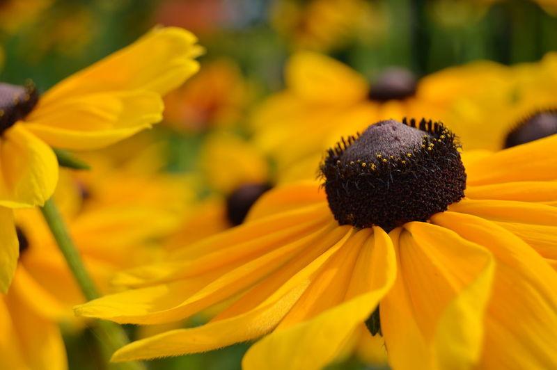 Flowers, Nature And Beauty Flowers Flower Photography Flowers,Plants & Garden Flowerphotography Nature Photography Beauty In Nature Nature Yellow Flower Flower Head Flower Petal