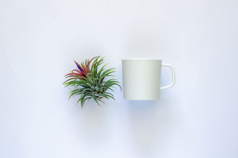 Directly above shot of coffee cup on table against white background