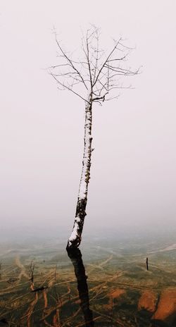 EyeEmNewHere Bare Tree Landscape Branch Outdoors Nature Tree Lone Tranquility Day Beauty In Nature Clear Sky No People Sky Photography Plitvice National Park Winter Croatia Croatiafulloflife