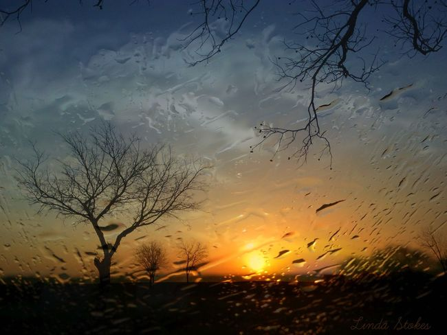 Beauty In Nature Close-up Day Nature No People Outdoors Rain Silhouette Sky Sun Sunset Tranquil Scene Tranquility Tree