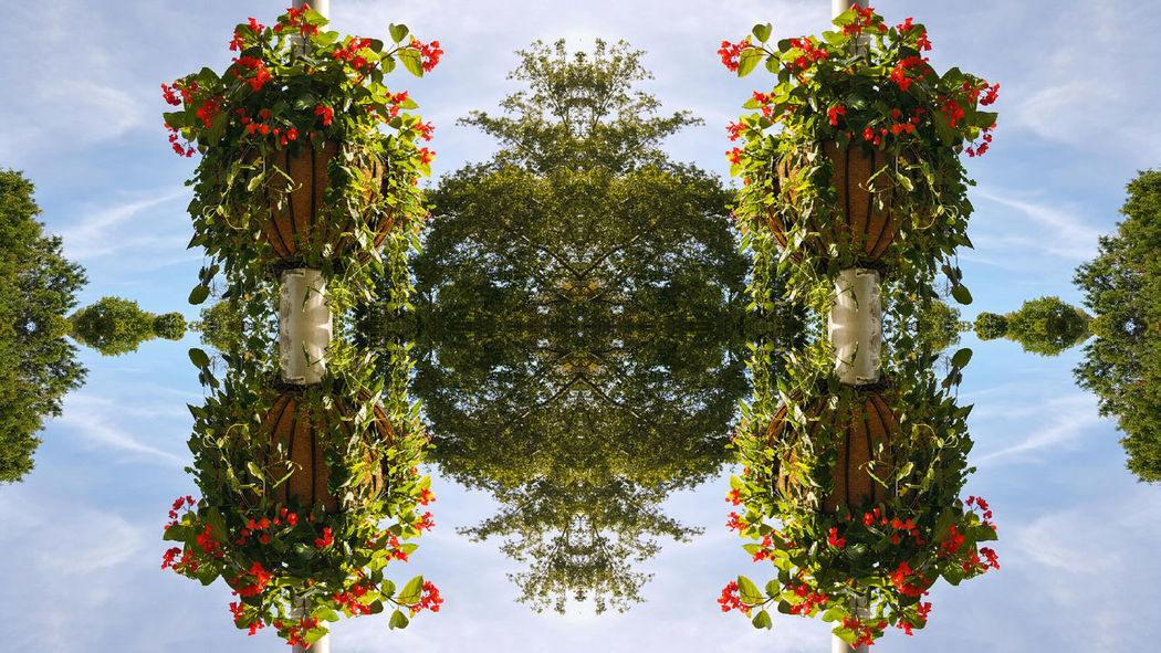 Dreamscape Garden Mirrored Mirrored Image Growing Freshness Kaleidoscopic Red Flower No People Basket Lightroom Note5photography Mirroreffect Flower Outdoors Cloud - Sky Beauty In Nature TakeoverContrast