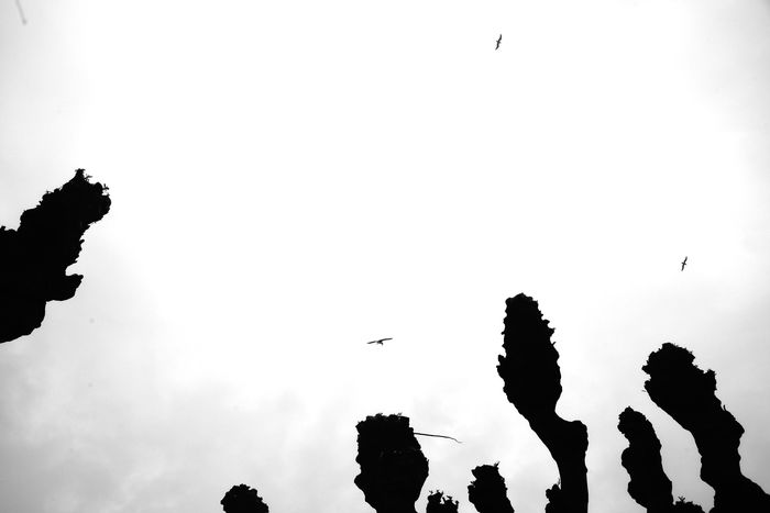 al fin del mundo Abstract Photography Animal Themes Animals In The Wild Away Bird Bird Of Prey Blackandwhite Photography Clear Sky Deformation Fly Away Flying Human Deformity Human Representation Invasion Low Angle View No People Outdoors Overthere Silhouette Simbolism  The Judgment Perspectives On Nature