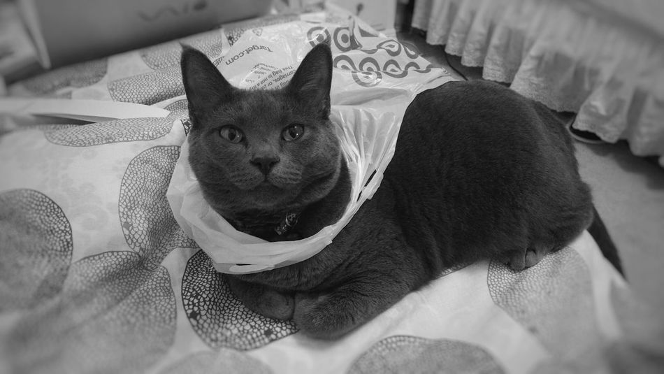 One word: cats Bagsgallore Black & White Kitty Cats 🐱 Catportrait She Climbed In On Her Own