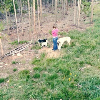 Puppies Kangal Dogoargentino Kishuken Hokkaidoken