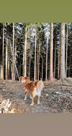 EyeEm Selects Pets Tree Animal Themes