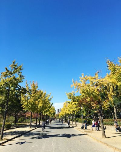 People Walking On Road And Sidewalk Amidst Trees Against Clear Blue Sky