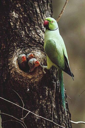 Perfect Shot Parrot Family❤ Family Love♥ Nurture