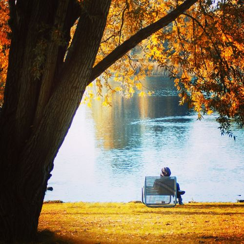 Tree Water Men Lake Sitting Togetherness Sky Fall Maple Leaf Lakeshore Leaves Autumn Autumn Collection Fallen Leaf Bench