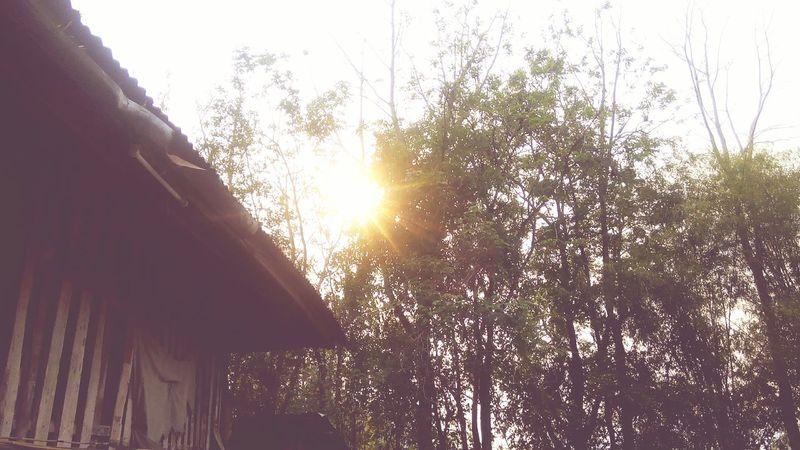 ท้องฟ้าสดใส กับ ไร่คุ้มสถิตย์ 🌲🍁🍀🍂🍃 Natural Trees Sunny☀