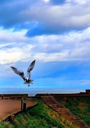 Bird Photography Birds Of EyeEm  Flying High Seagull Serenity Seagulls Animal Themes Animals In The Wild Beauty In Nature Bird Birds Birds_collection Cloud - Sky Day Fliying Birds Fliyng Flying Nature No People One Animal Outdoors Sea And Sky Seagull Seagulls And Sea Sky Spread Wings