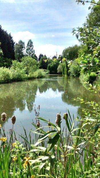My lunchtime walk Natural Beauty Lake Reeds Ripples Serenity Tranquility Eeyem Nature Lover Landscape Lake View Lake Idyllic Plant Reeds By Water Rural Scene Ripples In The Water Ripples Sunny Day