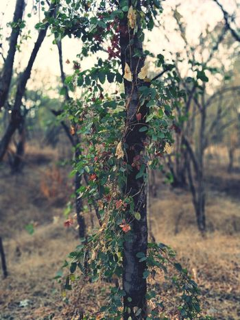 wish tree Wish Tree Nature Tree Growth No People Tree Trunk Outdoors Beauty In Nature