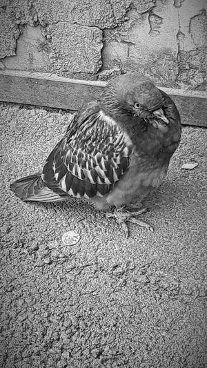 Mr. T Bird Bird
