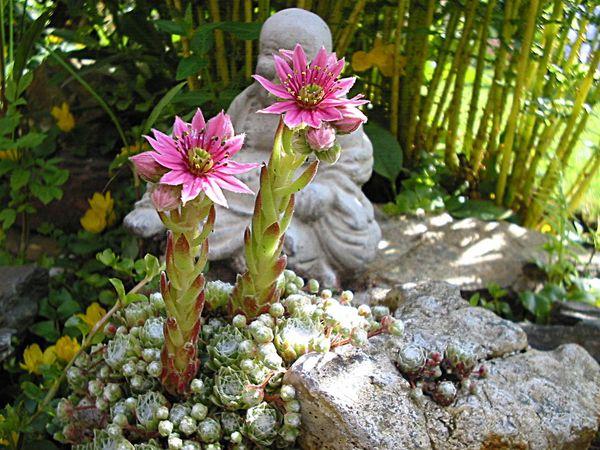 Flowerforfriends Floralperfection Eyeemflowerlover