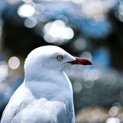 Lead_me_to_oblivion Birds Seagull Photography Nikon Bokeh Feathers Nature Outdoors Beach