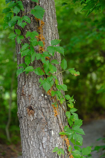 Green Green Color Growth Tree Trunk Detail Outdoors Plant On Tree Plants And Flowers