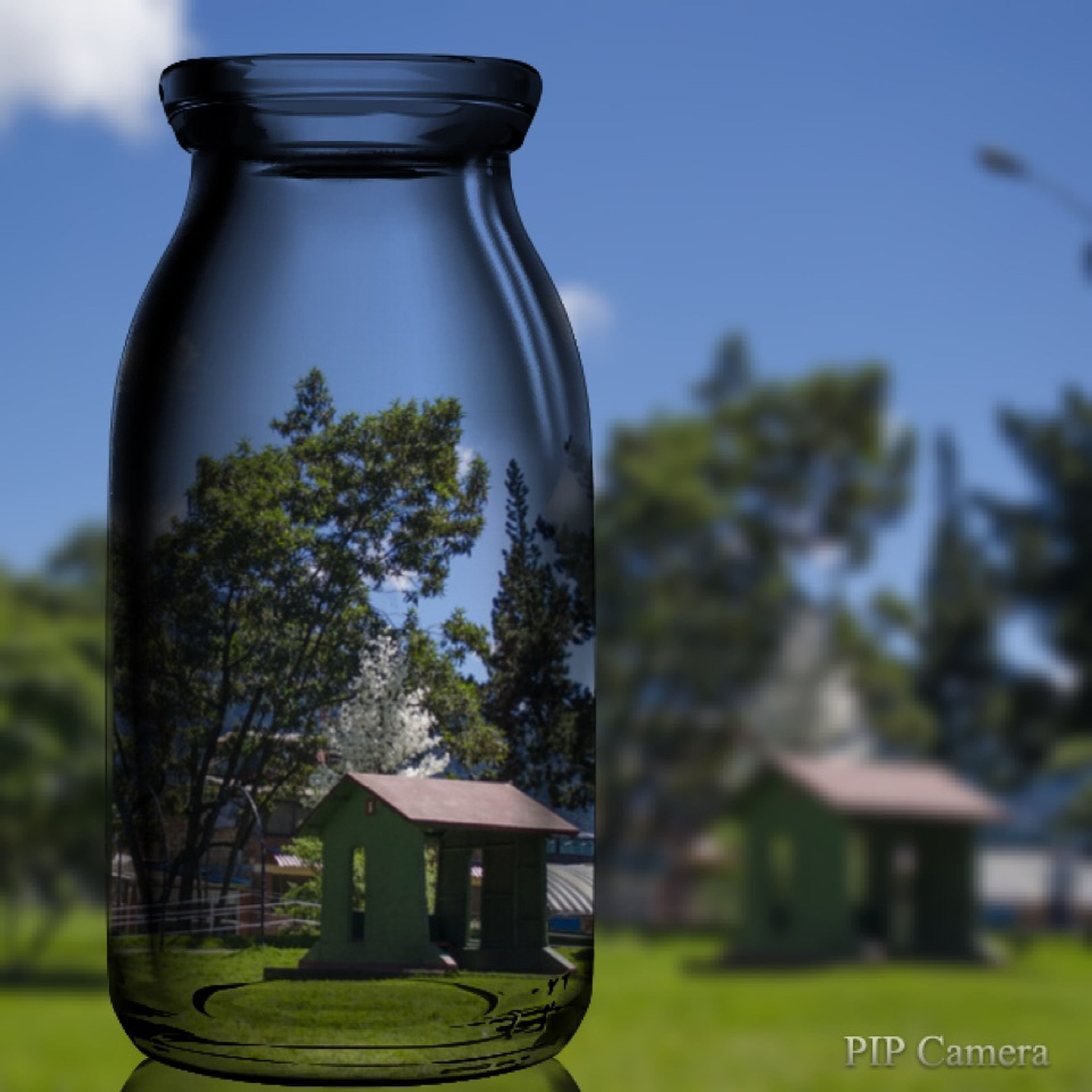 focus on foreground, close-up, tree, building exterior, glass - material, built structure, transparent, sky, blue, no people, architecture, day, green color, outdoors, low angle view, growth, selective focus, nature, plant, lighting equipment