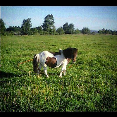 пони -тоже Кони , только маленькие... Littlehorse Pony SquareInstaPic КСКГармония Ослик НаВыпасе Лошадь ЛошадьНаВыпасе ЯЛюблюЛошадей Donkey PhotoSpam HorseLovers Horse HorseLoversClub НаВыпасе КЛЛ ЧастнаяКонюшня ЛюбителямПрироды ЛюблюЛошадей ЛюбителямЛошадей Animals DomesticAnimals HorseForse AnimalLovers Архив2015ОК_