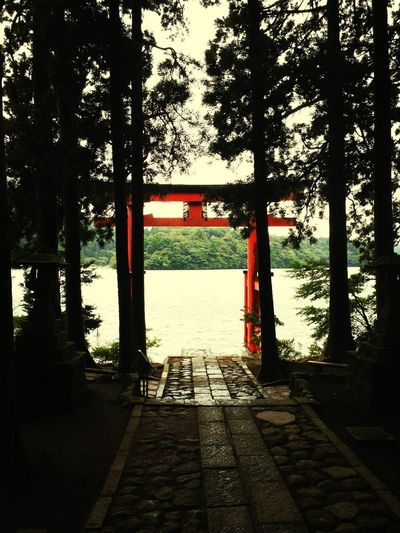 Shinto Shrine Lake Forest Cloudiness
