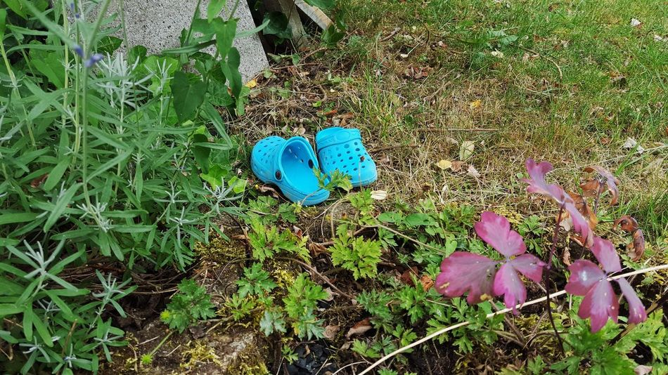 Comfortable Beauty In Nature Blue Childhood Close-up Day Fashion Field Flower Fragility Garden Garden Photography Gardening Grass Green Color Growth High Angle View Nature No People Outdoors Plant Rubber Shoes Shoes Water Shoes
