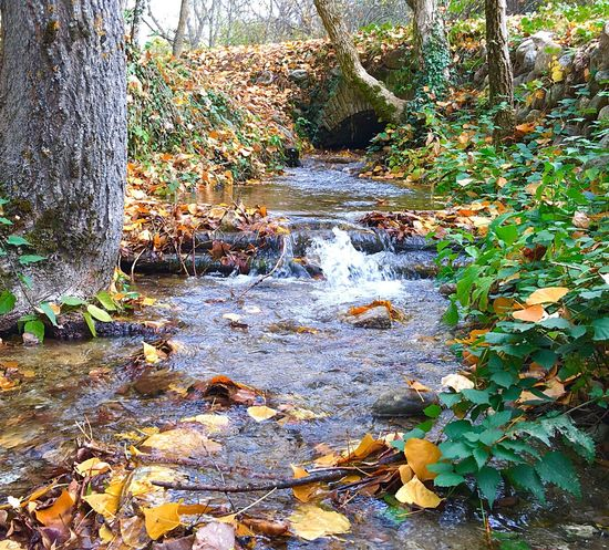 Simply autumn... Nature Water Tree Outdoors Leaf Scenics Autumn Stream Tranquility Forest No People Beauty In Nature Day Tranquil Scene Growth Stream - Flowing Water IPhone6splus