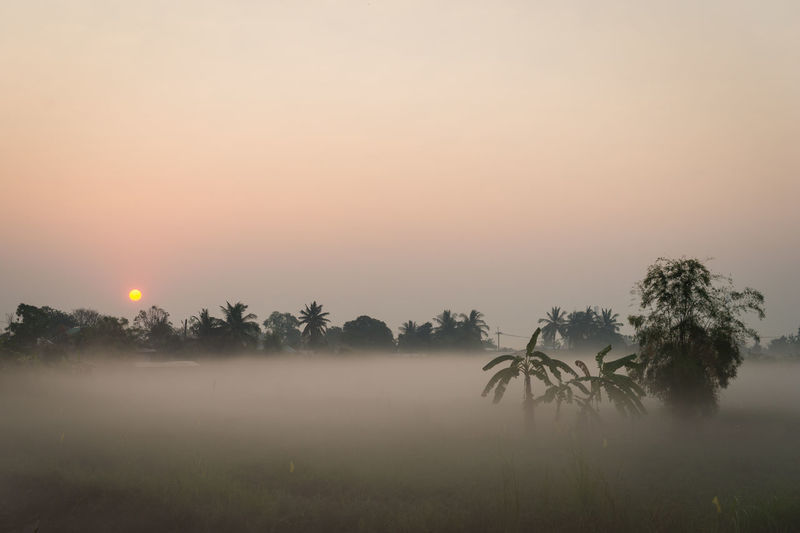 Fog Sky Beauty In Nature Tree Tranquil Scene Scenics - Nature Tranquility Plant Sunset Environment Sun Non-urban Scene Landscape Idyllic Orange Color Nature No People Water Hazy  Outdoors