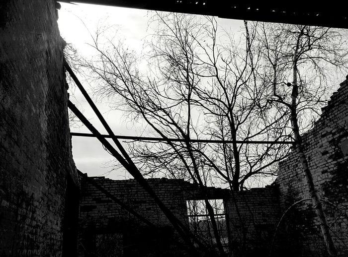 Abandoned Buildings Overgrown Sunlight