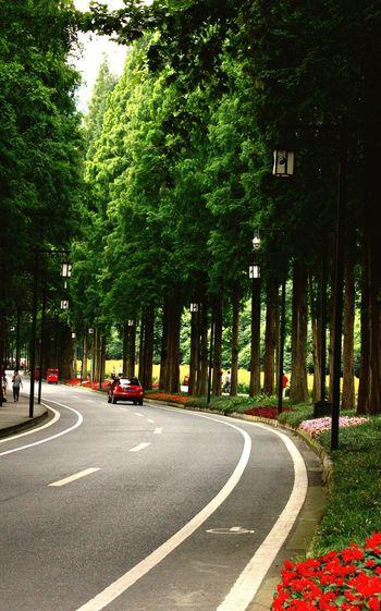 Qingcheng mountain path Chengdu, Sichuan The giant panda's hometown summer Tree Road The Way Forward