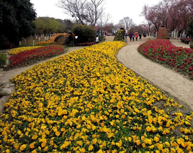 View of yellow flowering plants in park