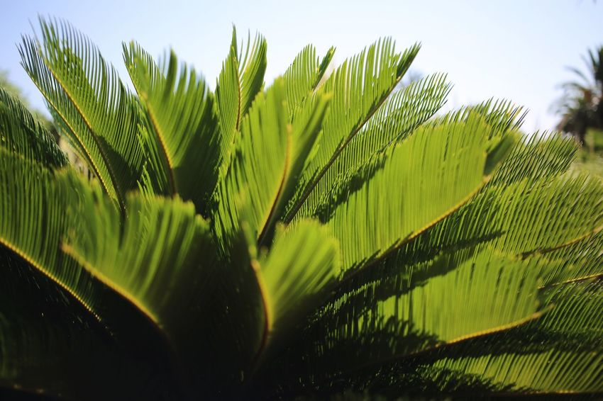 Pattern Fern Plant Green Color Growth Nature Beauty In Nature No People Day