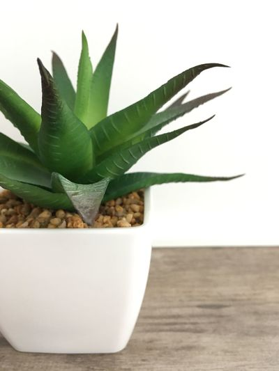 Visual Creativity One Side Green Succulent Plants Green Succulents Green Plant On Table Fake Plant Plant Only White Background Cactus Aloe Vera Plant Aloe Growth Herbal Medicine Plant Thorn
