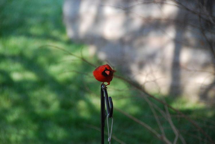 Red Plant Focus