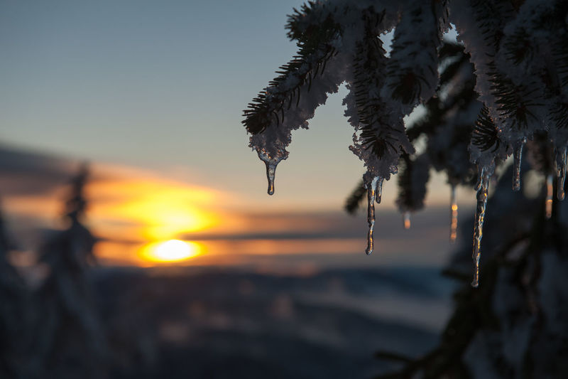Close-up of frozen plants against sky during sunset