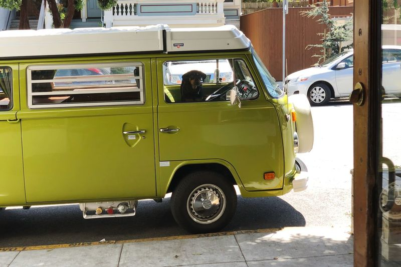Dog in VW Bus VW Bus Dog Transportation Mode Of Transportation Land Vehicle City Street Day Car
