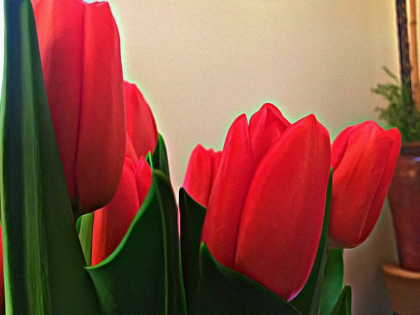 Happy Easter/Passover/weekend! Health & Love to all!🙏🏼🙏🏼🌷 Indoors  Close-up xox Tulips Moments Flowers Beautiful Photooftheday No People Beauty Flowerporn Photography Eyeem Photography Eye4photography  Green Leaves Spring Flowers Spring Montréal April 2017 Thank You My Friends 😊