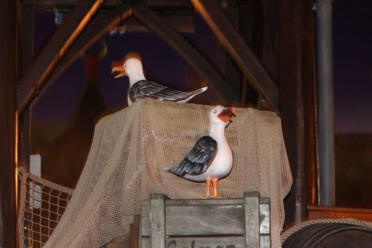 Gulls Funny Picture Amusement Park Bird Working