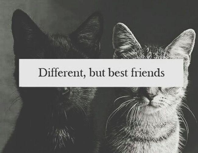 TRUE ?
