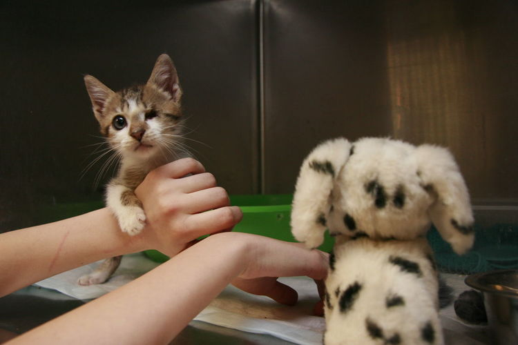 Close-Up Of Hands With Cat