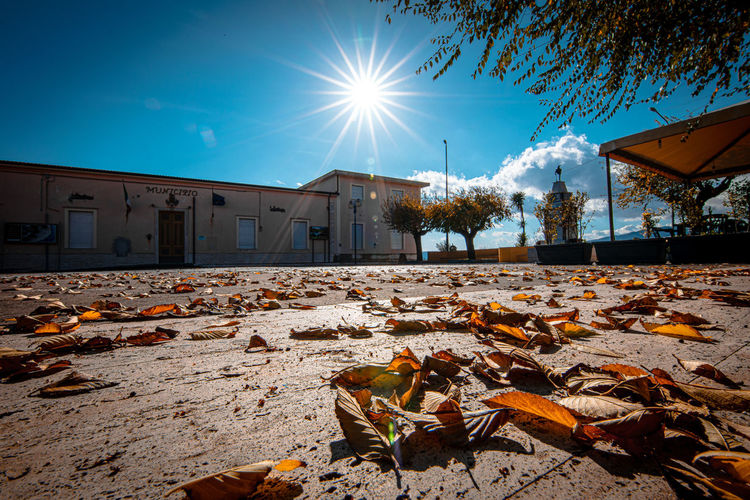 Dry leaves on street by building against sky