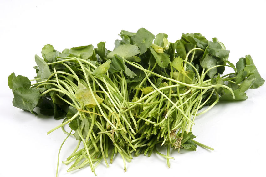Daun Pegaga (Centella asiatica) Daun Pegaga (Centella Asiatica) Centelia Close-up Food Food And Drink Freshness Green Color Healthy Eating No People Pegaga Vegetable White Background