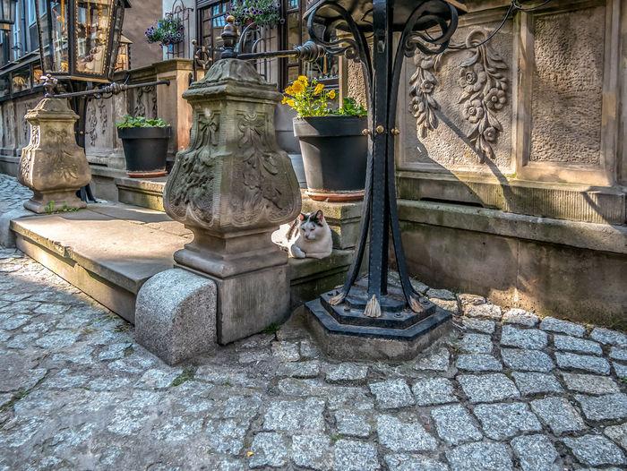 Cat lying on