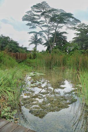 Kranji Marshes Nature Nparks Nparksbuzz Reflection Tranquility Tree Water