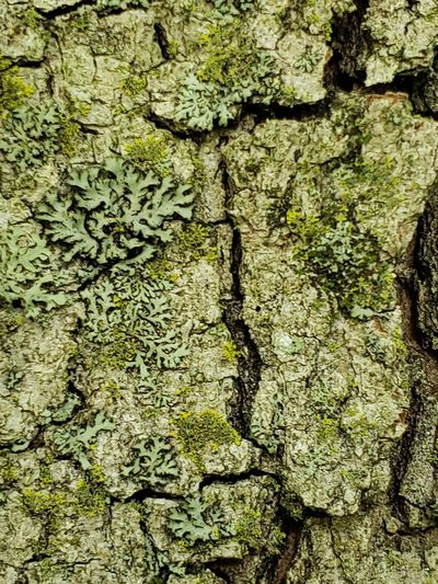 moss on trunk