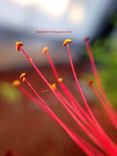IPhone Photography Macro Photography EyeEm Nature Lover EyeEm Best Shots