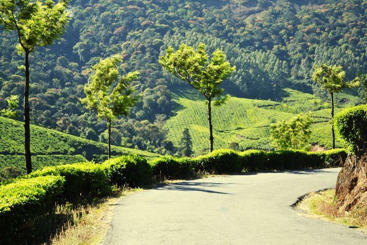 Mountain Road In Munnar