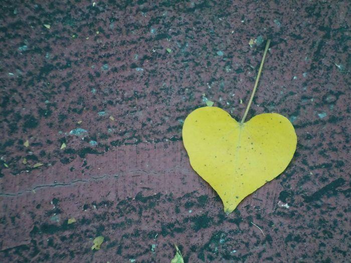 High angle view of heart shape leaf on stone