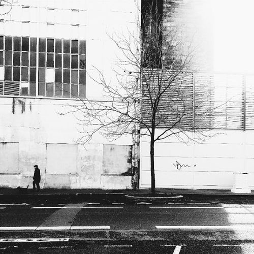 When winter feels a bit too little long 🎲 Lyon Blackandwhite Winter Tree Adorenoir Black Calender Wall January Dog Vscogood VSCOBlack France Landscape Street Concept Lonely Galaxys3 Samsung Streetphotography Smartphone Onlylyon